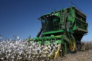 Modernes Gerät zur Ernte von Baumwolle gab es damals nicht. Sklaven legten eigens Hand an.