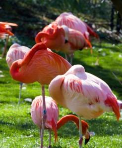 Der Park beherbergt die einzigen wildlebenden Flamingos in den USA.