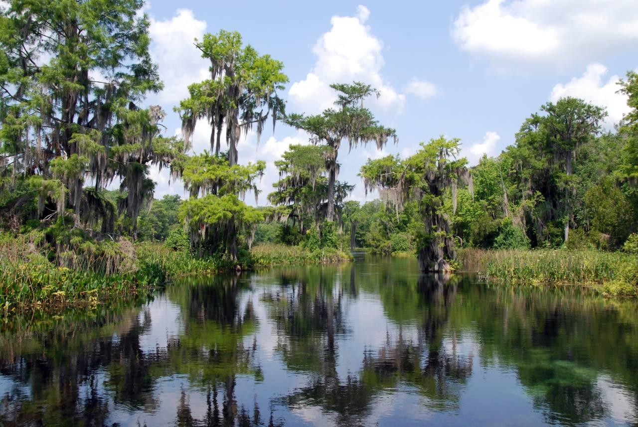 Etwa 70 km südwestlich von Miami erstrecken sich die Everglades an der Südspitze Floridas auf einer Gesamtfläche von 5.700 qkm.