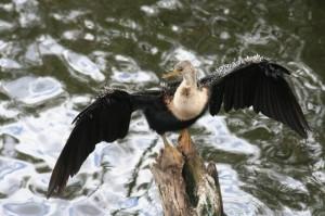 350 verschiedene Vogelarten teilen sich die 6104 km² des Everglades Nationalparks.