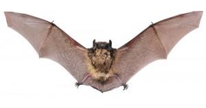 In Bracken Cave bei San Antonio sind viele Fledermäuse Zuhause.