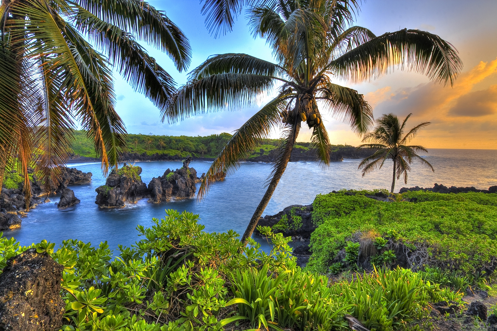 an introduction to the nature and culture of hawaii a tropical island An introduction to hawaii that includes information about how the state got its name, the state's nicknames, how the state citizens are addressed, and the state quarter.