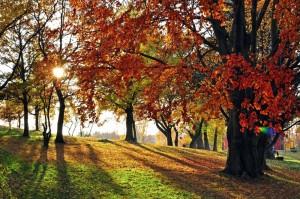 Das Phänomen Indian Summer ist durch eine besonders intensive Blattverfärbung in den Laub- und Mischwäldern berühmt.