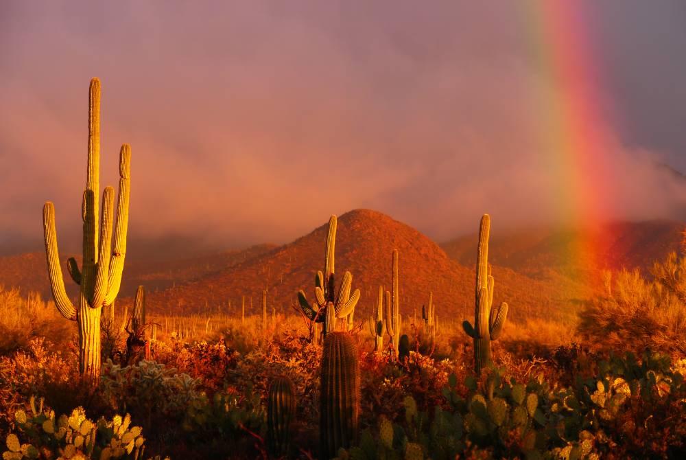 Der Saguaro National Park ist ein Schutzgebiet für die oft vielarmigen Säulen- oder Armleuchterkakteen, die Saguaros (sprich: ssa-wu-a-ros).