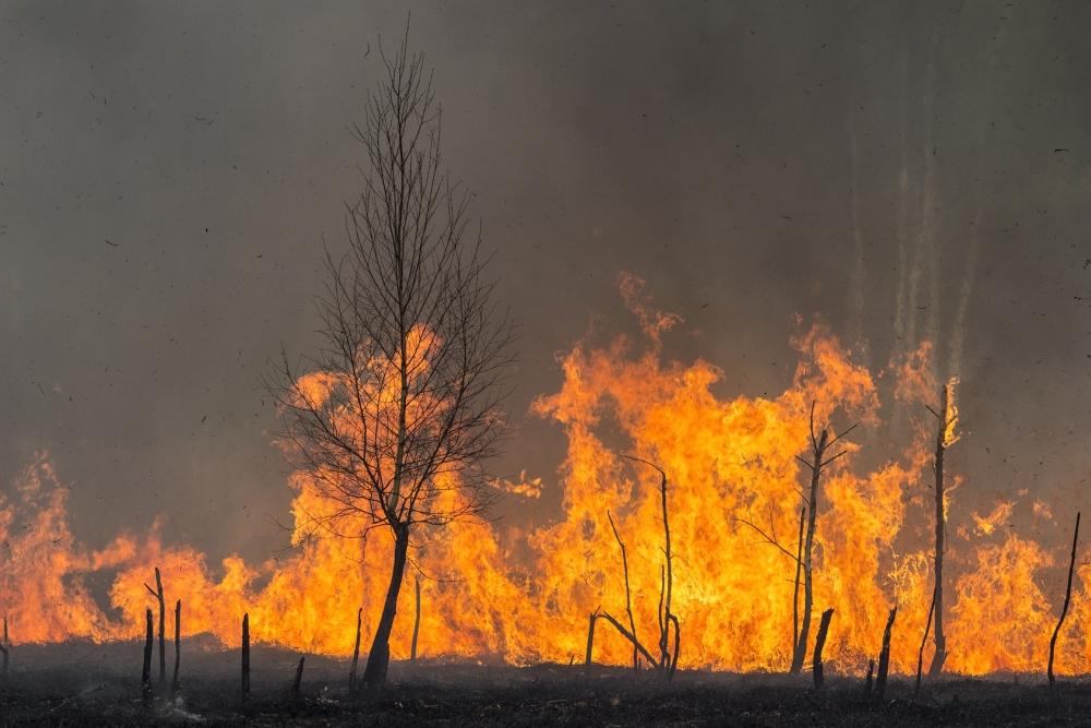 Waldbrand Im Yosemite Brand Kalifornien