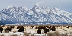 Die Winter im Grand-Teton-Nationalpark sind schneereich und vor allem für Wintersportler ein atemberaubendes Erlebnis.