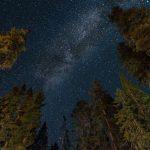 Die riesigen Bäume sorgen bei Nacht für einen idyllischen Ausblick Richtung Himmel.
