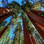 Die Nationalparks Sequoia und Kings Canyon liegen in unmittelbarer Nachbarschaft zueinander in der Sierra Nevada.