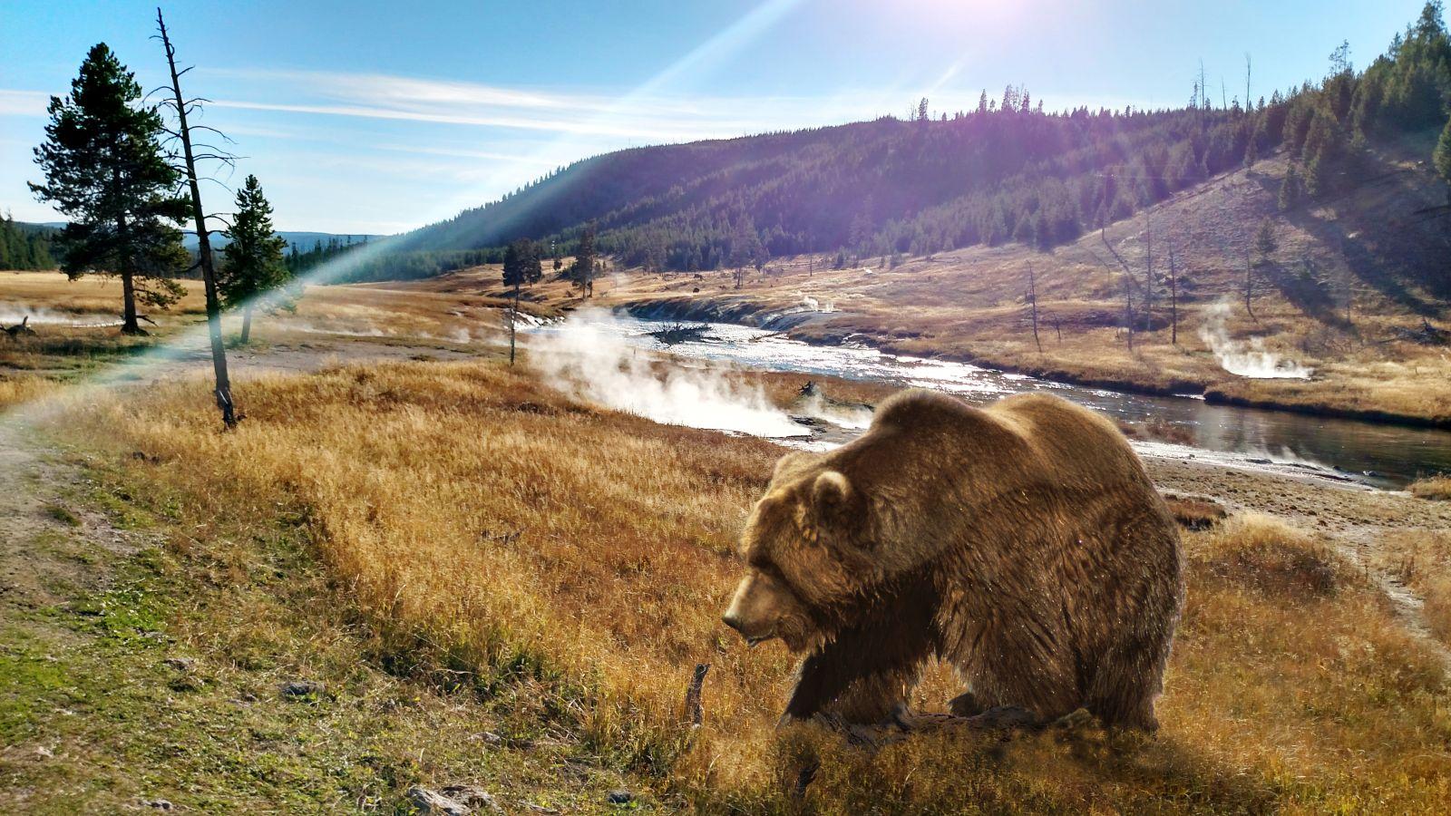 Der Yellowstone-Nationalpark ist unter anderem für seine Wildtiere bekannt.